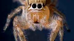 SpiderBen, FunnyorDie